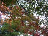 Autumn leaf colors and its science